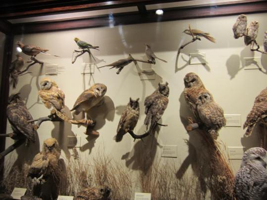 Owl display at the National Museum of Natural History in Washington DC